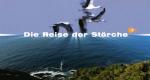 Die Reise der Störche – Bild: ZDF