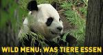 Wild Menu: Was Tiere essen – Bild: Nat Geo Wild