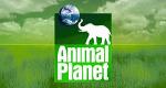 Jane Goodall – Hoffnung für die Menschenaffen – Bild: Animal Planet