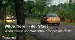 Wilde Tiere vor der Haustür – Bild: ZDF
