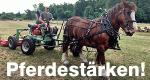 Pferdestärken! – Bild: NDR/Saskia Bezzenberger