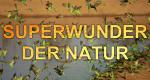Superwunder der Natur – Bild: ZDF/Lindsay Cupper