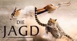 Die Jagd - Auf Leben und Tod – Bild: Silverback Films/BBC/polyband