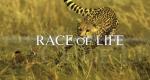 Spiel des Lebens – Bild: Big Media/Screenshot
