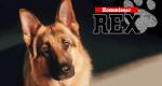 Kommissar Rex – Bild: SAT.1