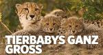 Tierbabys ganz groß – Bild: National Geographic