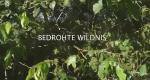 Bedrohte Wildnis – Bild: arte