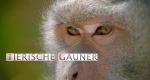 Natural Born Hustlers - Trickser im Tierreich – Bild: PBS