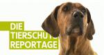 Die Tierschutzreportage – Bild: WDR