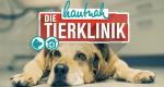 Hautnah: Die Tierklinik – Bild: VOX