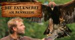 Die Falknerei am Rennsteig – Bild: MDR/Matthias Neuber