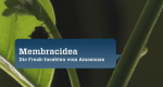 Membracidea – Die Freak-Insekten vom Amazonas – Bild: Mona Lisa Productions/ZDF