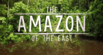 Borneos geheime Wildnis – Bild: ZDF Enterprises/Screenshot