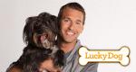 Der Hundetrainer – Lucky Dogs mit Brandon McMillan – Bild: Litton Entertainment 2013/Tyler Golden
