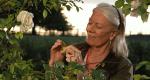 Rosamunde Pilcher: Die Muschelsucher – Bild: ZDF/ATVII