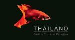 Wildes Thailand – Bild: BBC