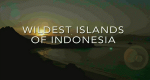 Wildes Indonesien – Bild: Animal Planet
