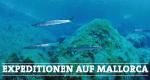 Expeditionen auf Mallorca – Bild: SWR/WDR/Mathias Hafner