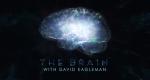 The Brain - Das menschliche Gehirn – Bild: PBS