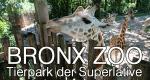 Bronx Zoo - Tierpark der Superlative – Bild: DCI