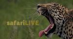 Safari Live – Bild: WildEarth/Screenshot