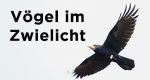 Vögel im Zwielicht – Bild: BR/arte