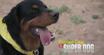 Super Dogs - Helfer in der Not – Bild: Animal Planet/Screenshot