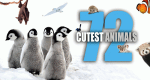 72 Cutest Animals – Bild: ABC Commercial