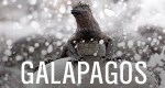 Mythos Galapagos – Bild: HR/NDR Naturfilm/Blue Planet Film/Michael Riegler