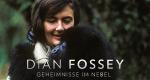 Dian Fossey: Geheimnisse im Nebel – Bild: National Geographic/Robert I.M. Campbell
