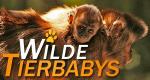 Wilde Tierbabys – Bild: Geo Television/BBC