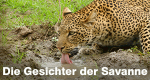 Die Gesichter der Savanne – Bild: ZDF/Plimsoll Productions