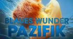 Blaues Wunder Pazifik – Bild: ZDF/Scott Snider