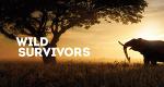 Tierische Überlebenskünstler – Bild: Blue Ant Media