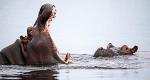 Die Flut - Okavango unter Wasser – Bild: Nat Geo Wild