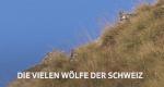 Wölfe in der Schweiz – Bild: SRF
