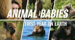 Fabelhafte Tierbabys – Bild: BBC/Flip Flop Films