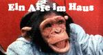 Ein Affe im Haus